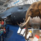 Natural History Museum Interior, London, England
