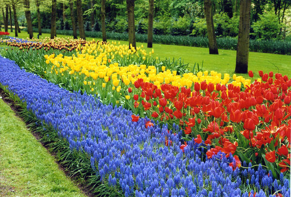 Flowers at Keukenhof, Lisse, Netherlands