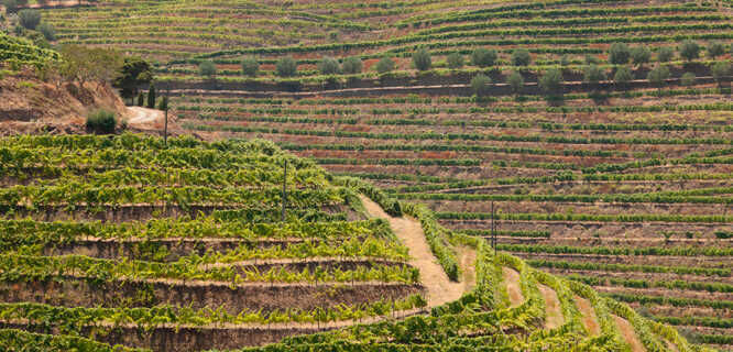 Vineyard terraces in Peso da Régua, Portugal