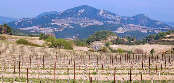 Côtes du Rhône vineyard, France