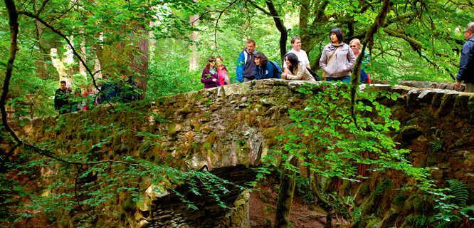Hermitage woodland, Dunkeld, Scotland