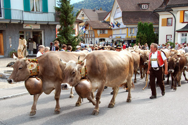 Alpabfahrt cow procession, Appenzell, Switzerland