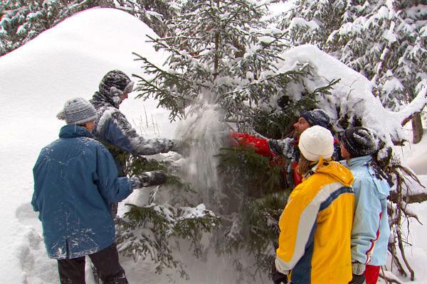 Christmas tree hunt, Gimmelwald, Switzerland
