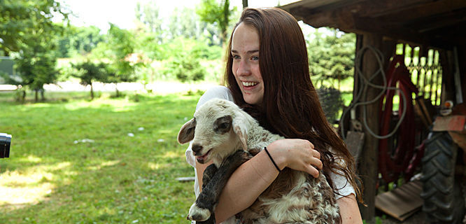Goat cuddle at farm in Goričan, Croatia