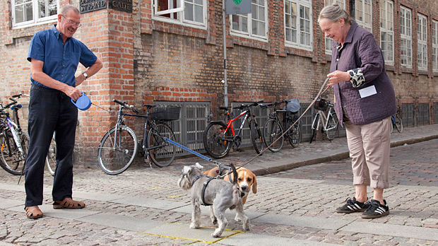 Dog conference, Copenhagen, Denmark