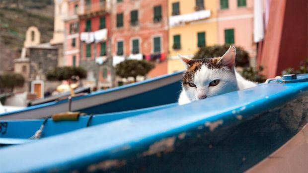 Harbor kitty, Vernazza (Cinque Terre), Italy