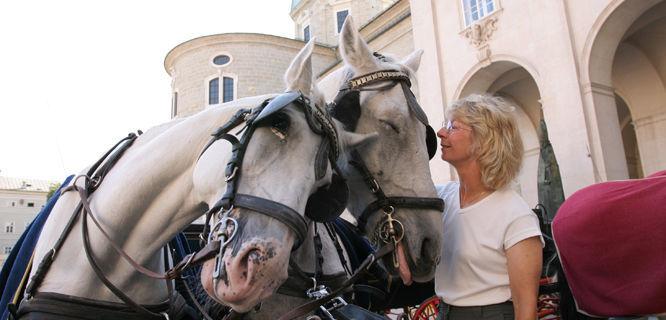 Nuzzly horses, Salzburg, Austria
