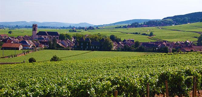 Vineyards, Pommard, France
