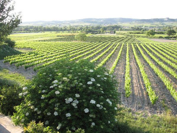 Côtes du Rhône wine road, France
