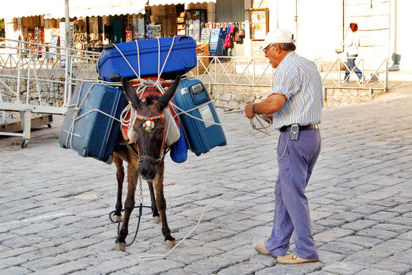 Mule in Hydra, Greece