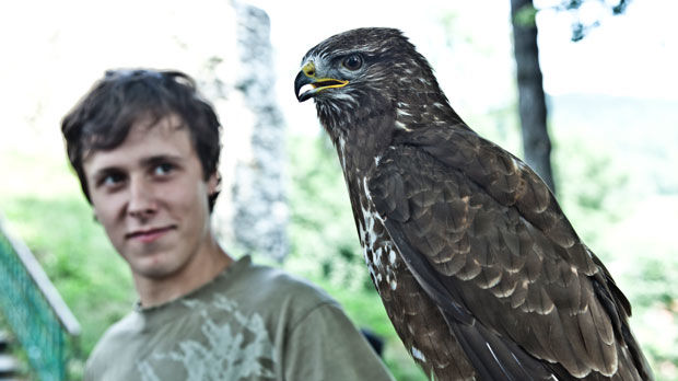 Falconry demonstration, Moravia, Czech Republic