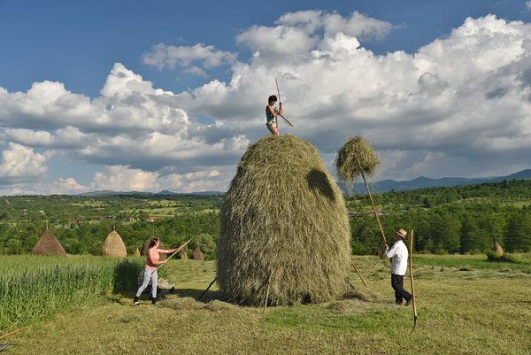 Hay bales, Maramureș, Romania