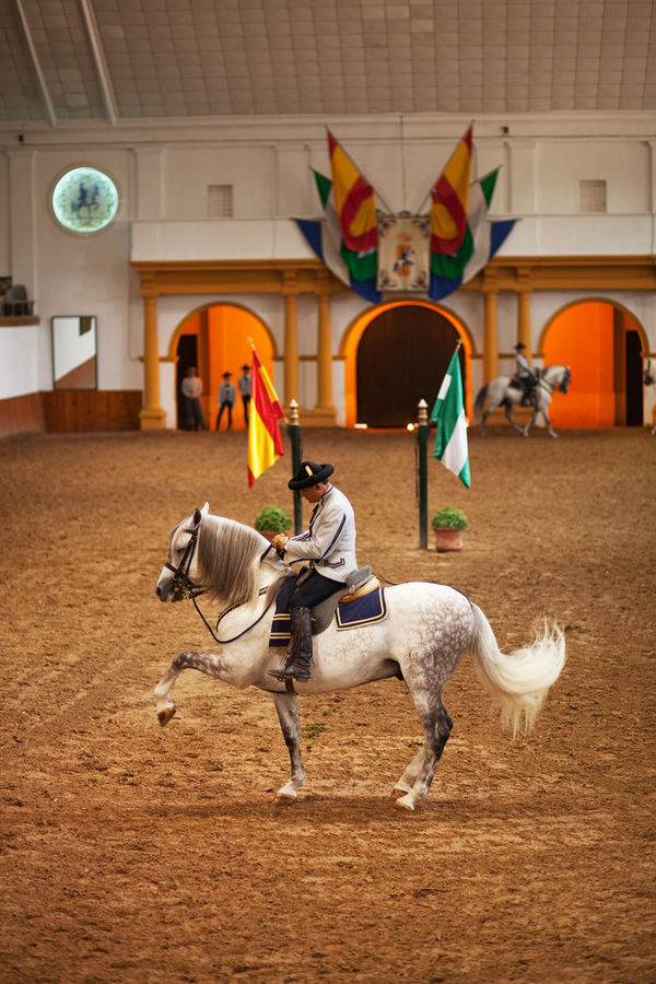Royal Andalusian School of Equestrian Art, Jerez, Spain