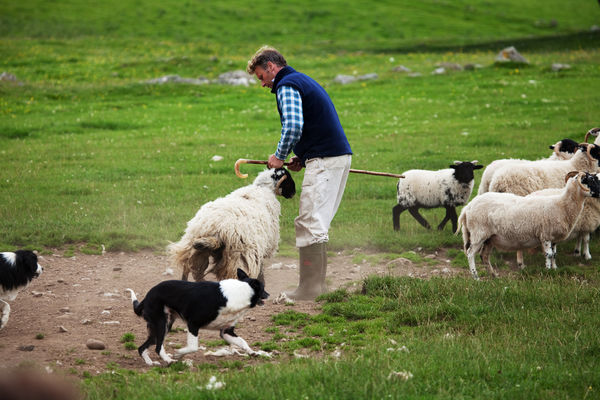 Leault Working Sheepdog Farm, Kincraig, Scotland