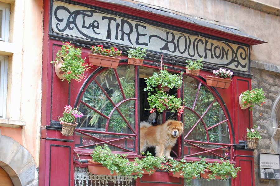 Restaurant proprietor in Lyon, France