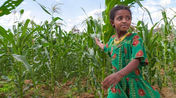 Farm outside of Axum, Ethiopia