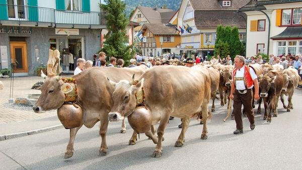 Alpabfahrt cow procession, Appenzell, Switzerland