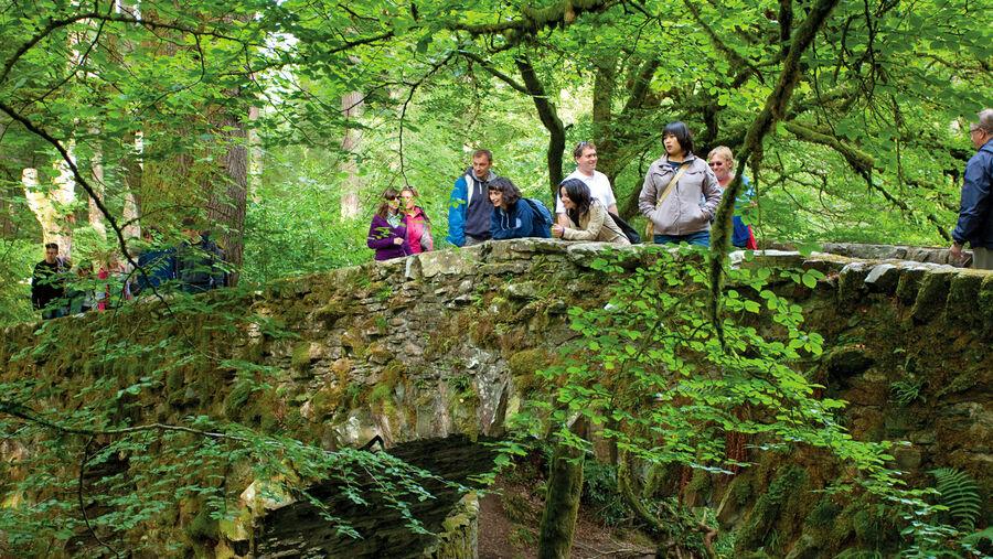 Hermitage woodland, Dunkeld