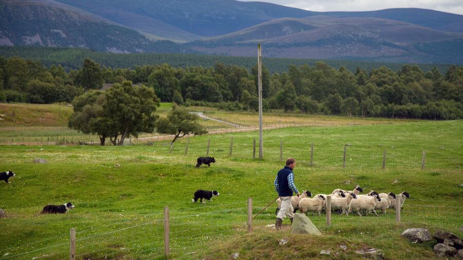 Leault Working Sheepdog Farm, Kincraig