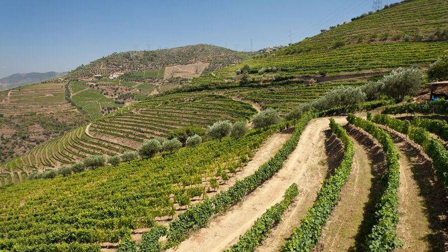 Quinta de Santa Eufemia, Douro Valley